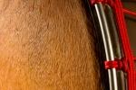 les Tambourguignons peau avec poils